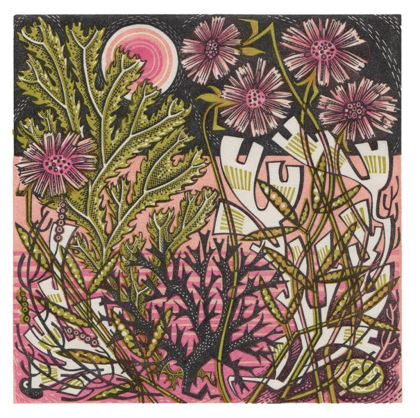 Sea Pinks (Wood Engraving)